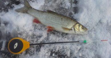 Где искать головля зимой на Дону
