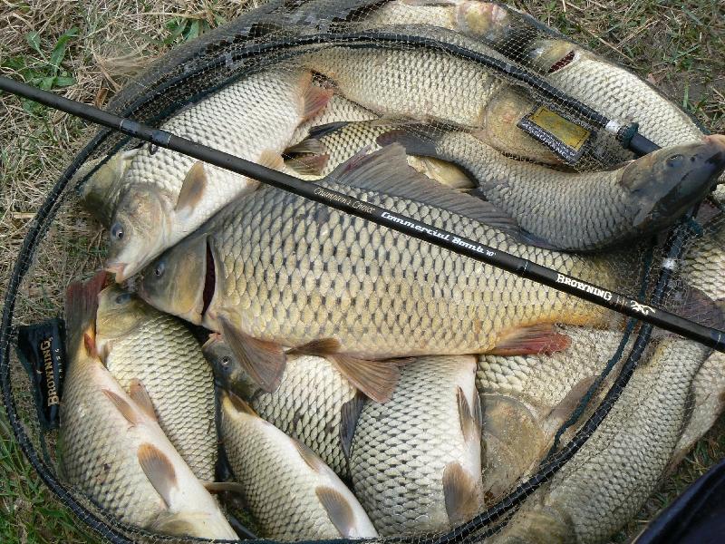 Размер рыбы разрешенный к вылову в 2019 году в Липецкой области