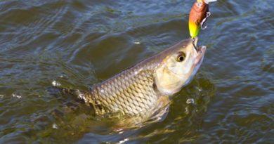 рыбалка на южном буге