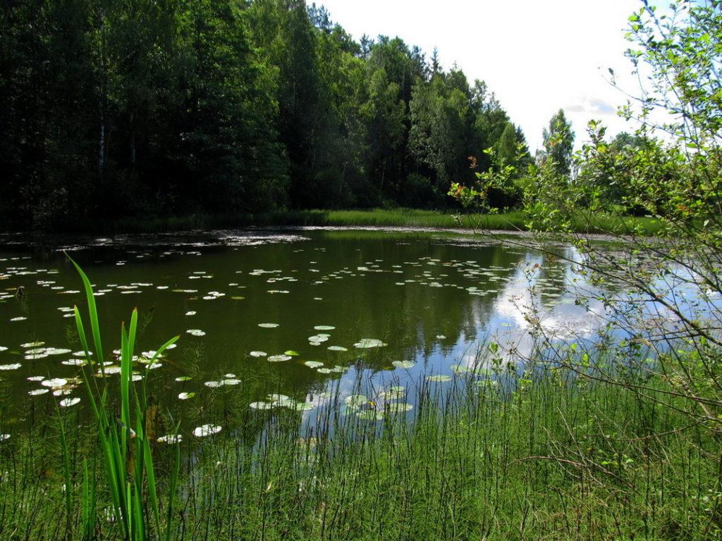 Где ловить линя