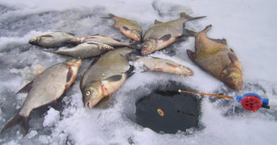 Как удержать рыбу у лунки зимой