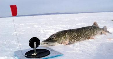 Запрет на ловлю щуки и судака в Воронежской области в 2020 году