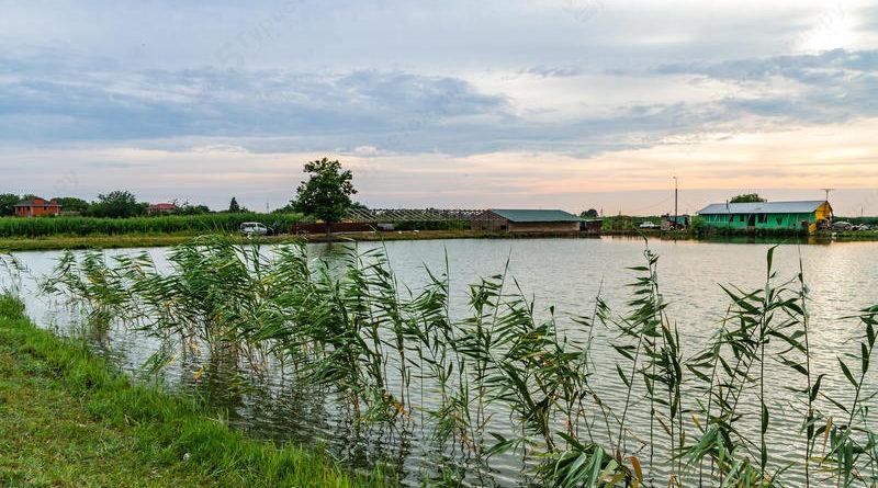 Спортивная рыбалка на «Шаповаловых прудах»