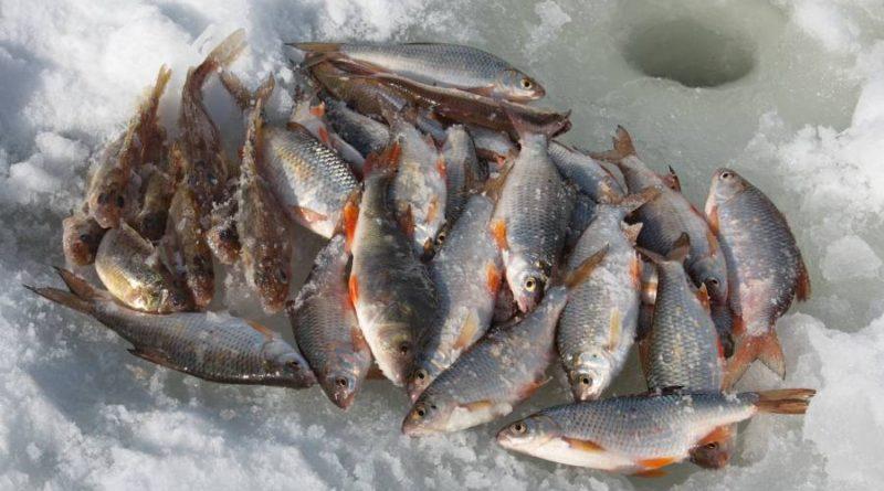 Рыбалка на реке Обь зимой