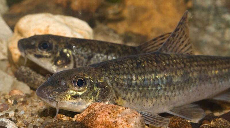 Какую рыбу можно ловить без ограничений