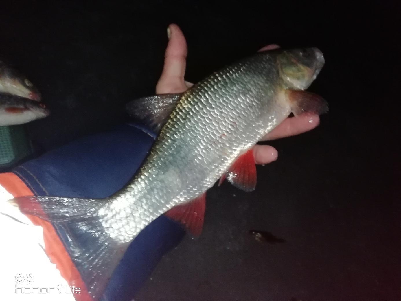 Липецкая область рыбалка река дон